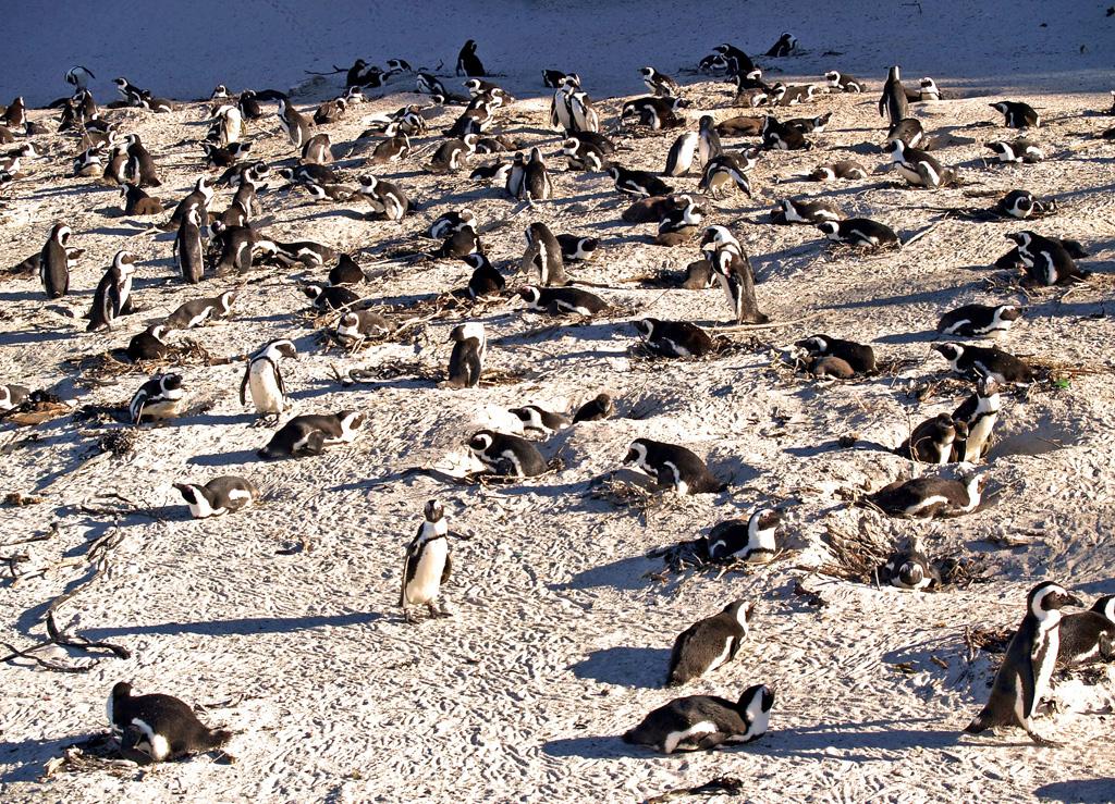 Пляж Боулдерс в ЮАР-е, фото 1
