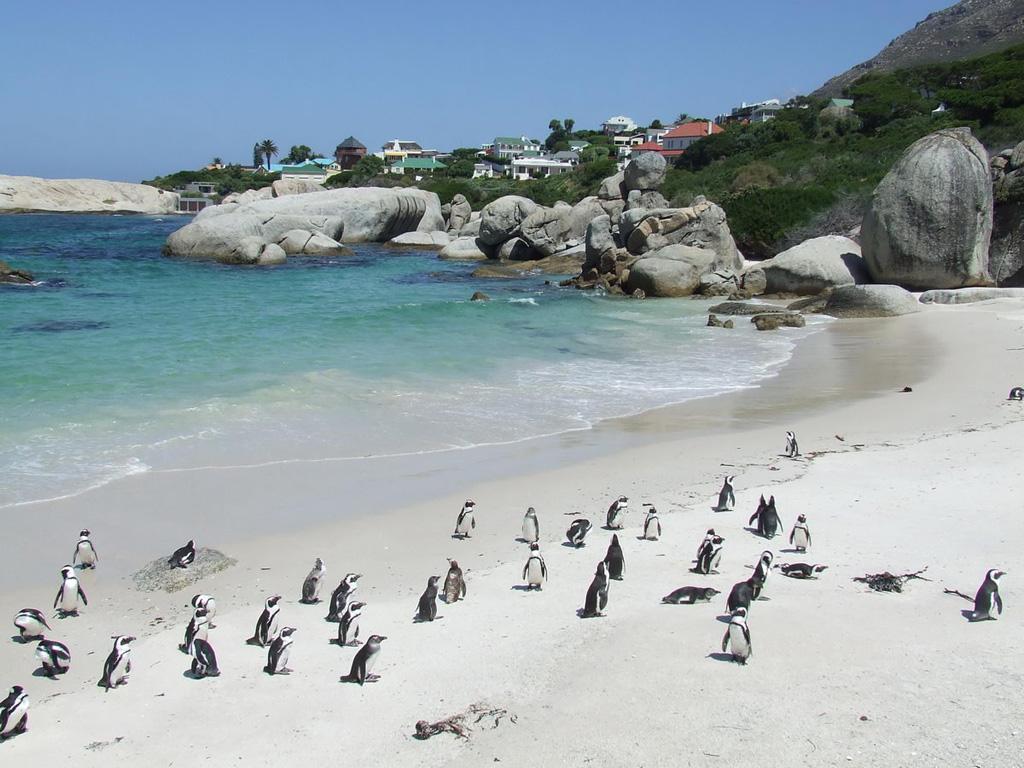 Пляж Боулдерс в ЮАР-е, фото 2