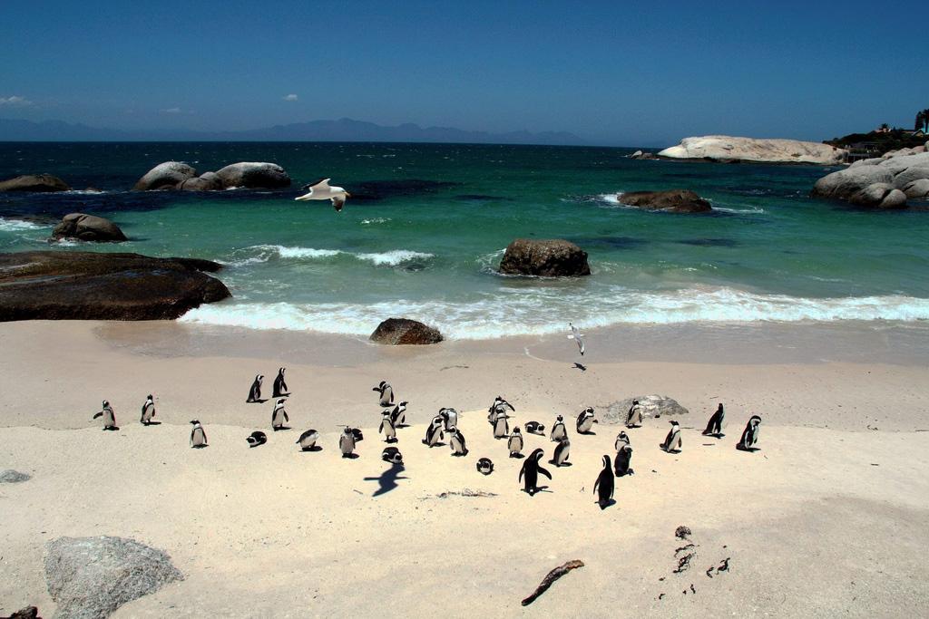 Пляж Боулдерс в ЮАР-е, фото 3