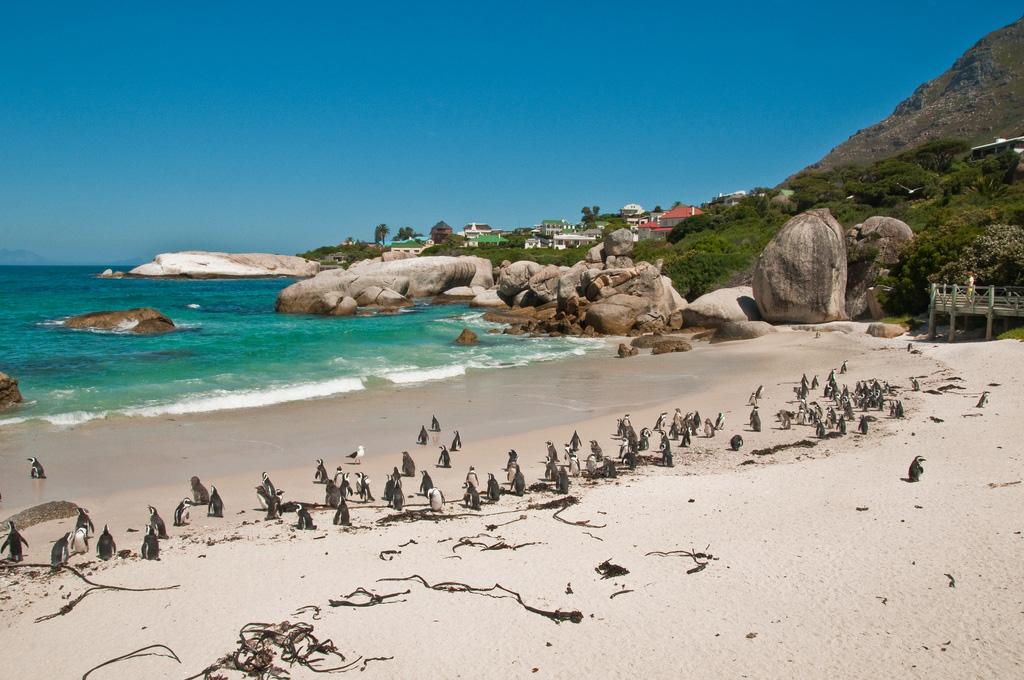 Пляж Боулдерс в ЮАР-е, фото 4
