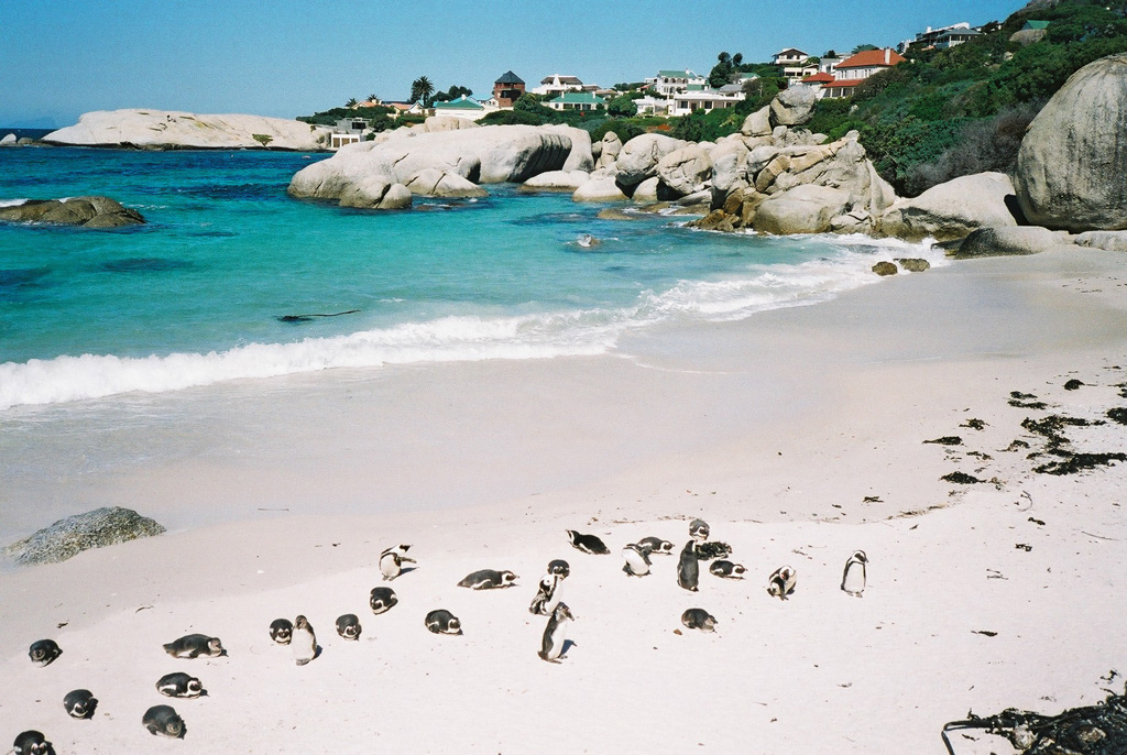 Пляж Боулдерс в ЮАР-е, фото 6