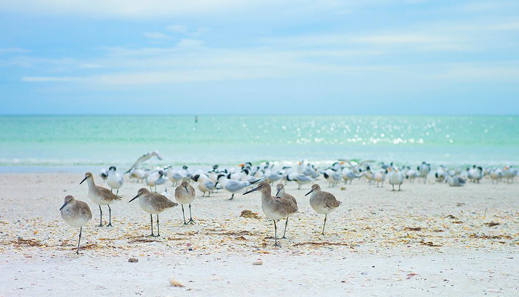 Пляж Лидо-ди-Йезоло в Италии, фото 7