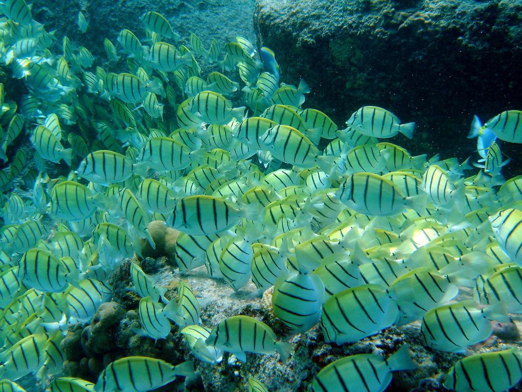 Пляж Симиланских островов в Таиланде, фото 3