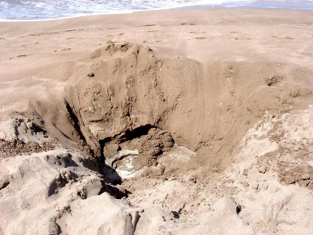 Пляж Хот-Вотер Бич в Новой Зеландии, фото 3