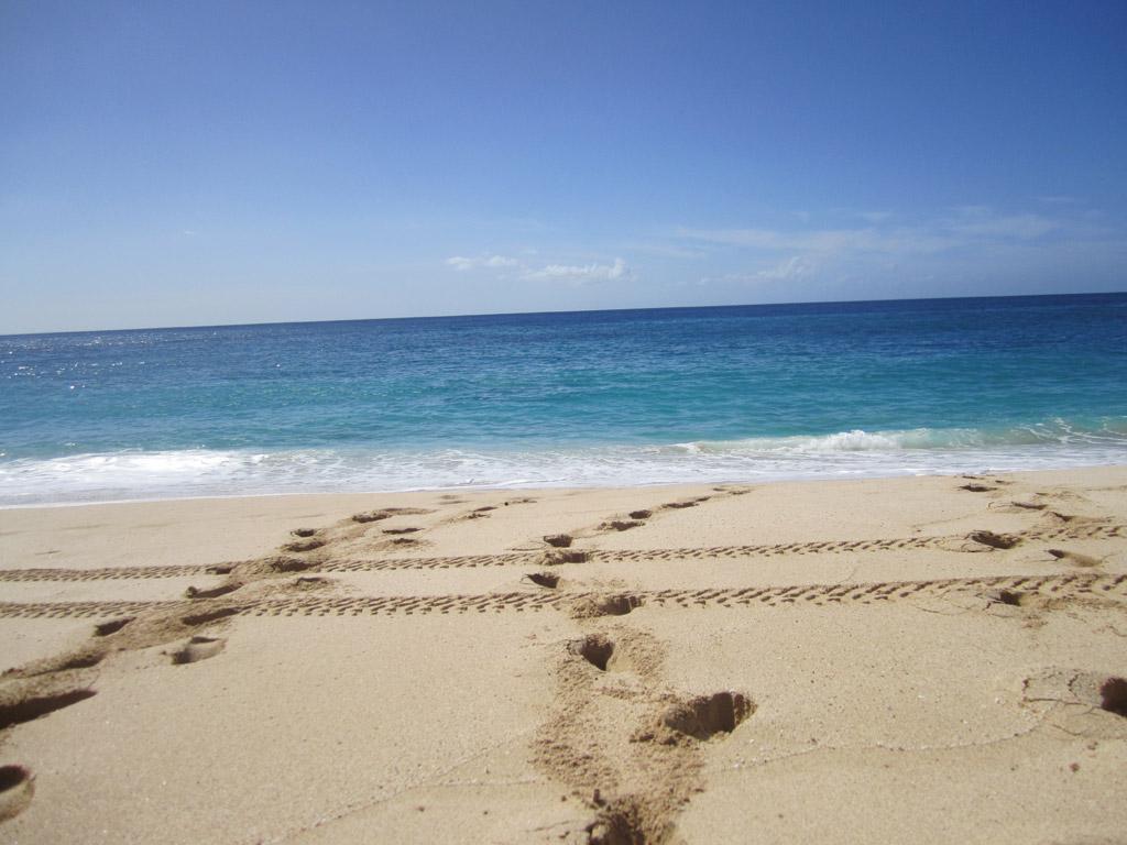 Пляж Йокогама Бэй в США, фото 11
