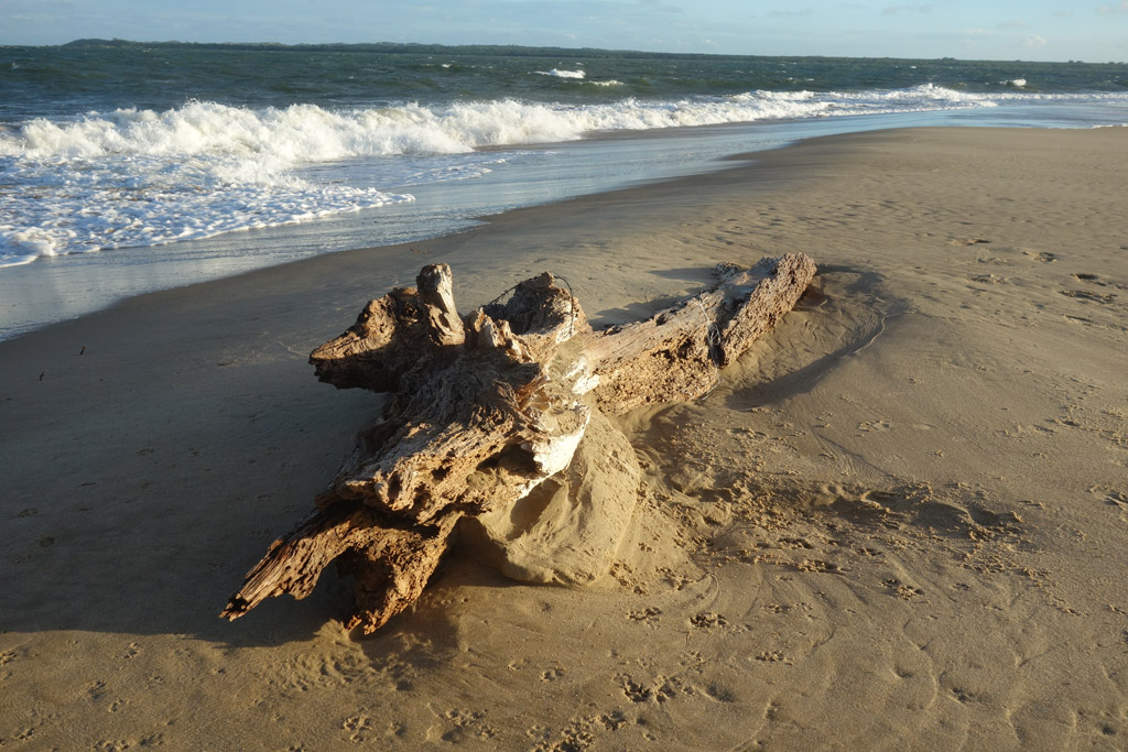 Пляж Ламу в Кении, фото 3