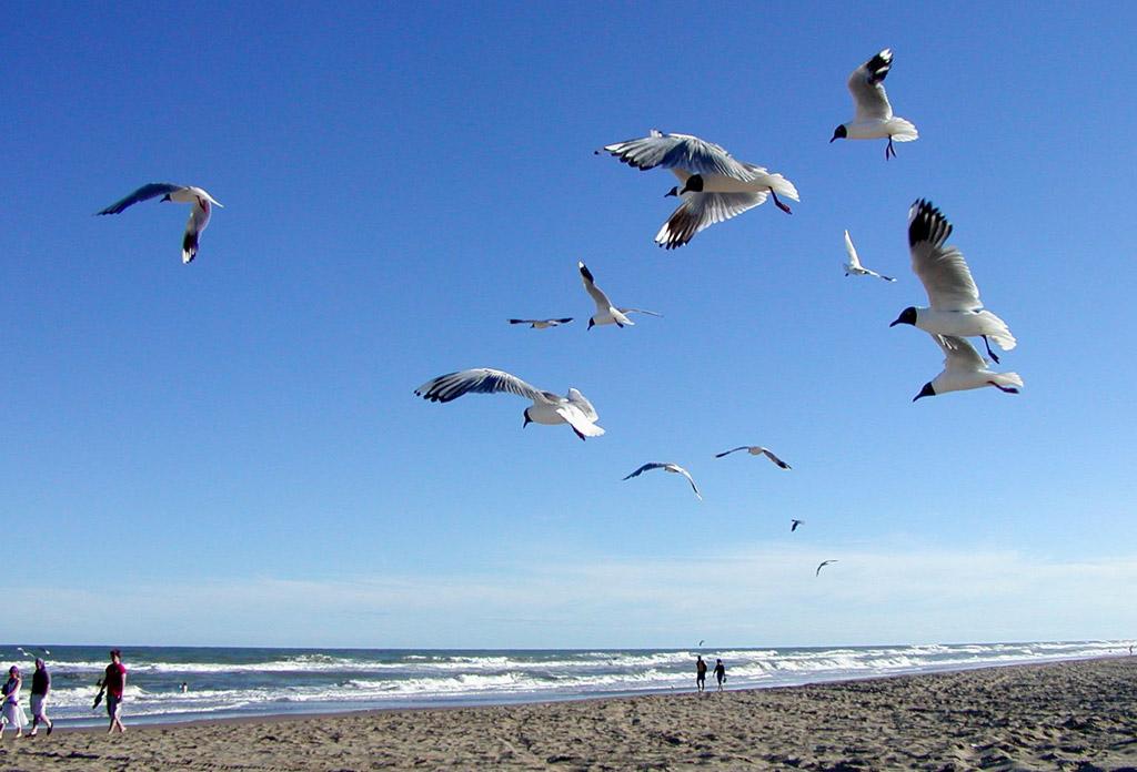 Пляж Пинамар в Аргентине, фото 7