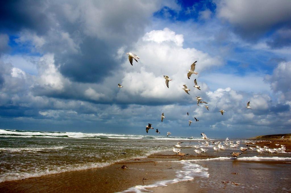 Пляж Тексель в Нидерландах, фото 3