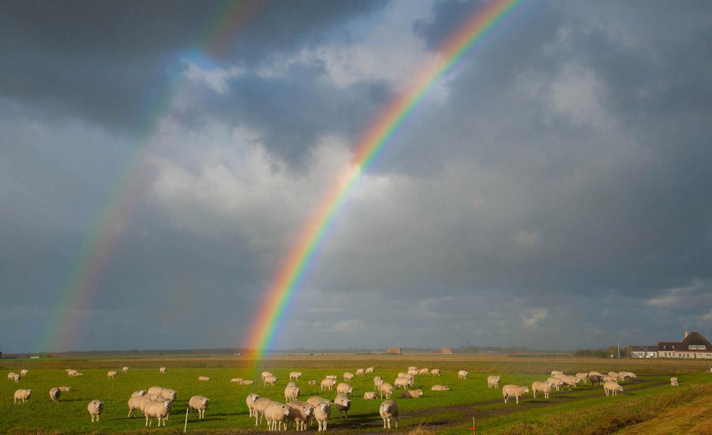 Пляж Тексель в Нидерландах, фото 4