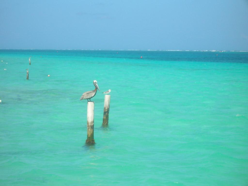 Пляж Пуэрто-Морелос в Мексике, фото 13