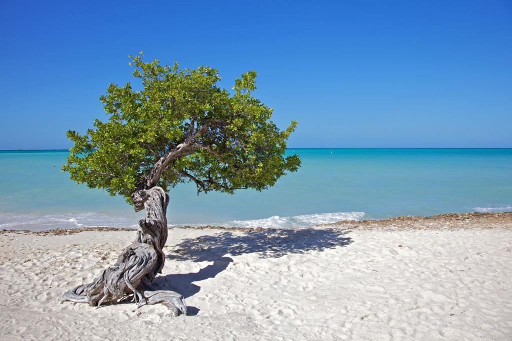 Пляж Игл Бич на Арубе, фото 1