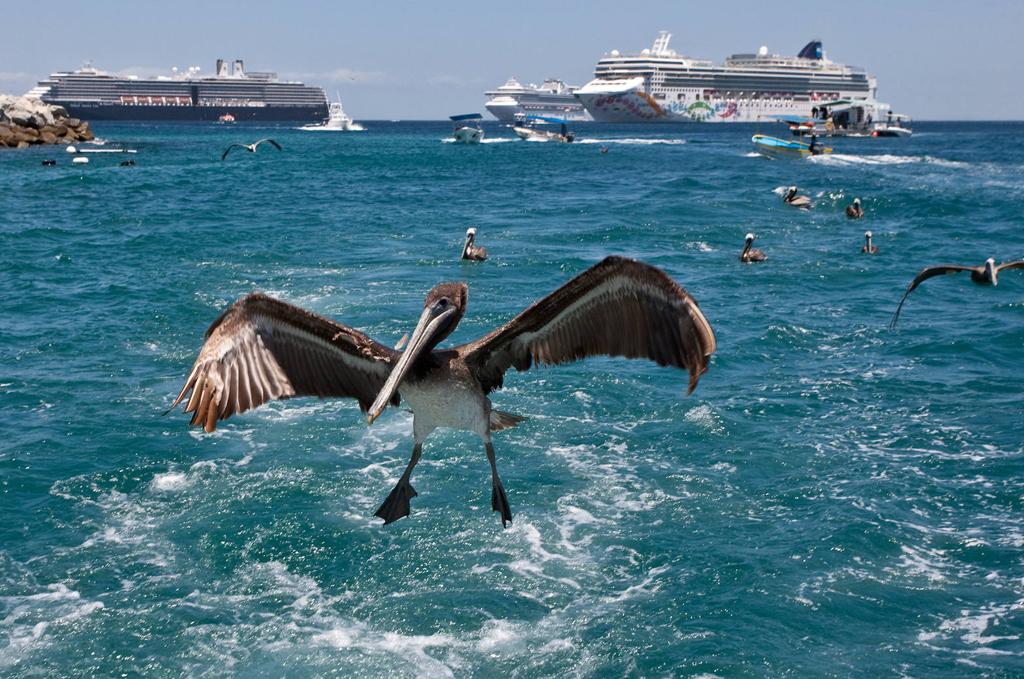 Пляж Кабо-Сан-Лукас в Мексике, фото 9