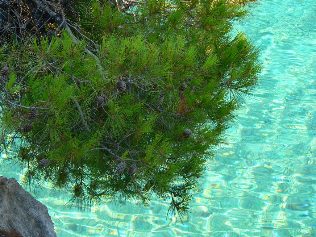 Пляж острова Скопелос в Греции, фото 13