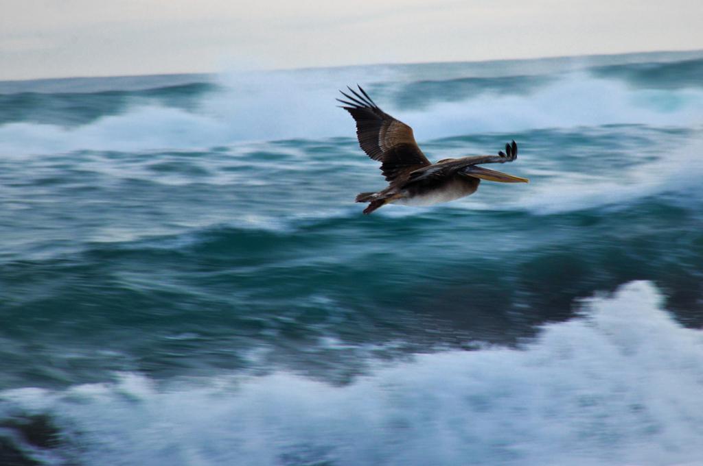Пляж Пичилему в Чили, фото 14