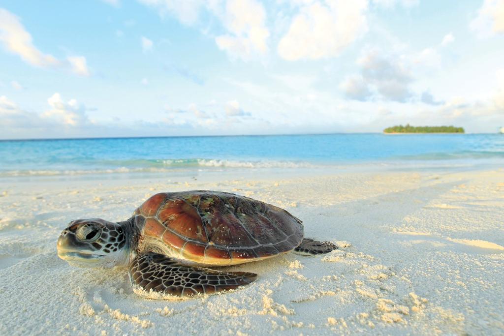 Пляж острова Ихуру на Мальдивах, фото 9