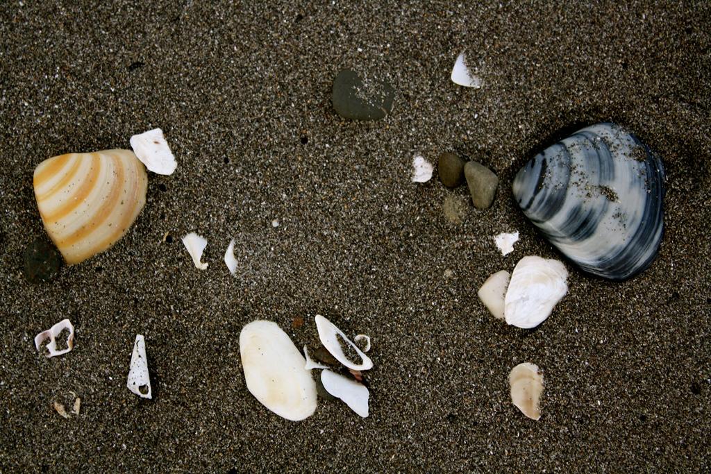 Пляж Кафия в Новой Зеландии, фото 1