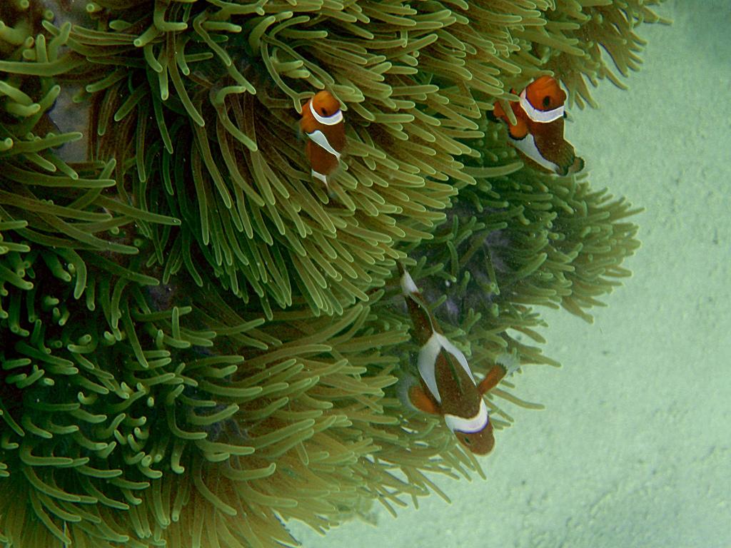 Пляж Мапур в Индонезии, фото 4