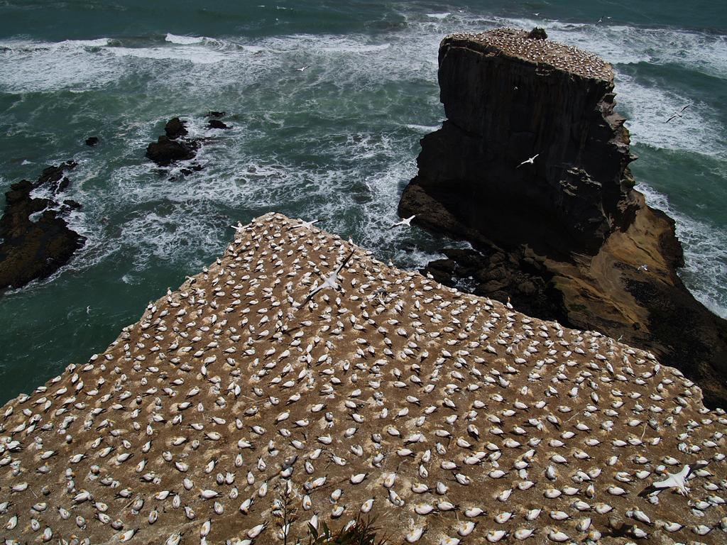 Пляж Муриваи в Новой Зеландии, фото 1