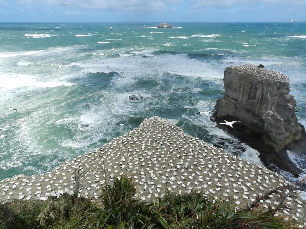 Пляж Муриваи в Новой Зеландии, фото 3