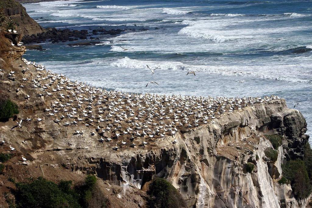 Пляж Муриваи в Новой Зеландии, фото 8