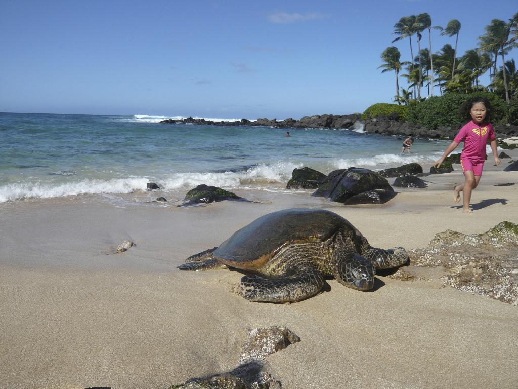Пляж Туртл на Ямайке, фото 2