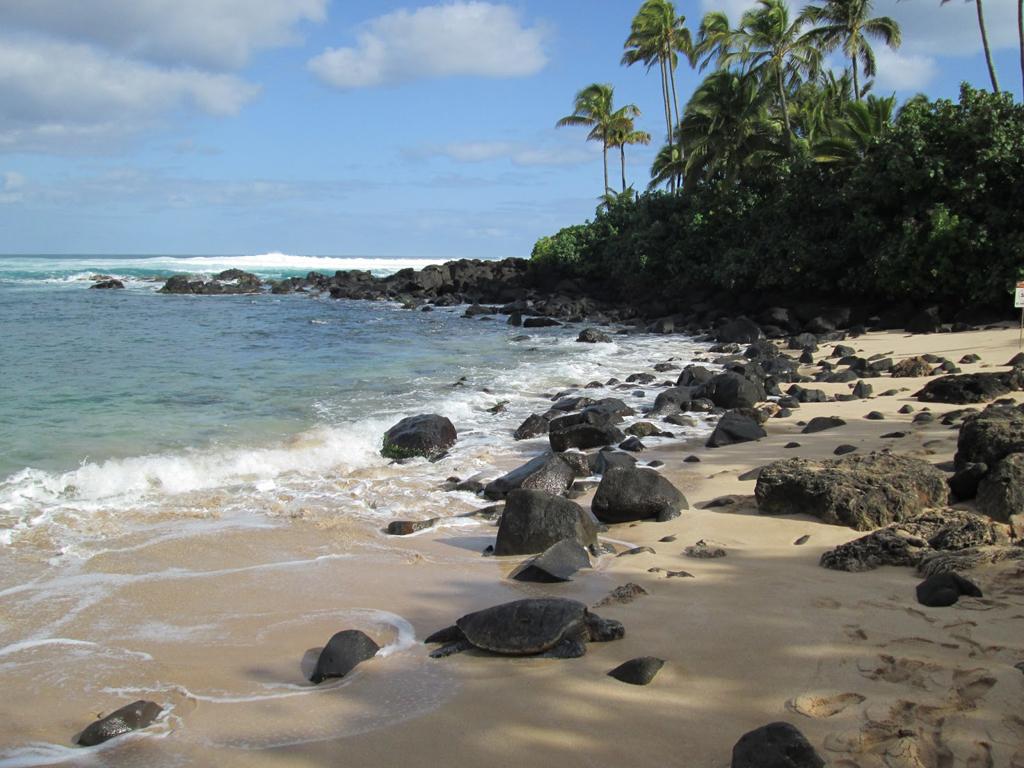 Пляж Туртл на Ямайке, фото 6