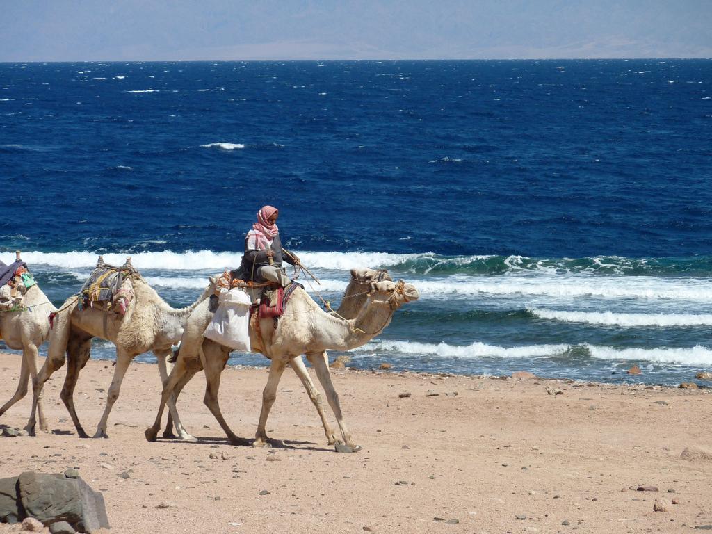 Пляж Дахаб в Египете, фото 4