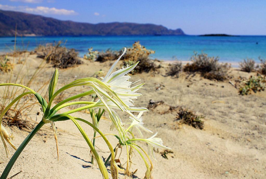 Пляж Элафониси в Греции, фото 11