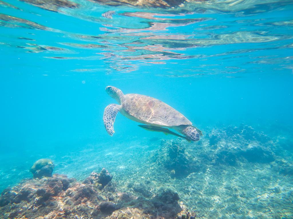 Пляж острова Керама в Японии, фото 10