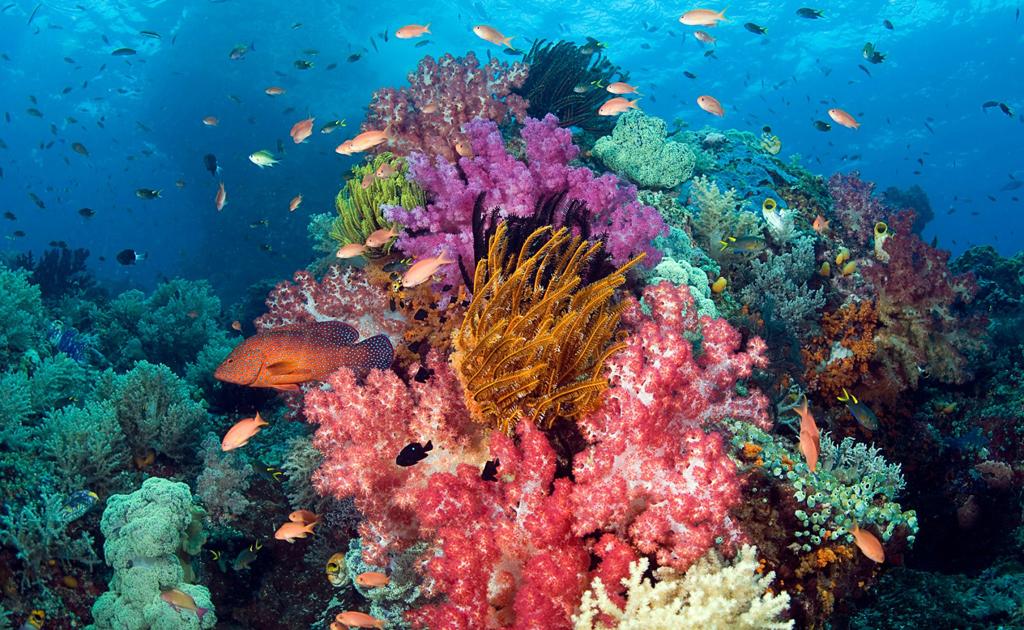 Пляж острова Раджа Ампат в Индонезии, фото 1