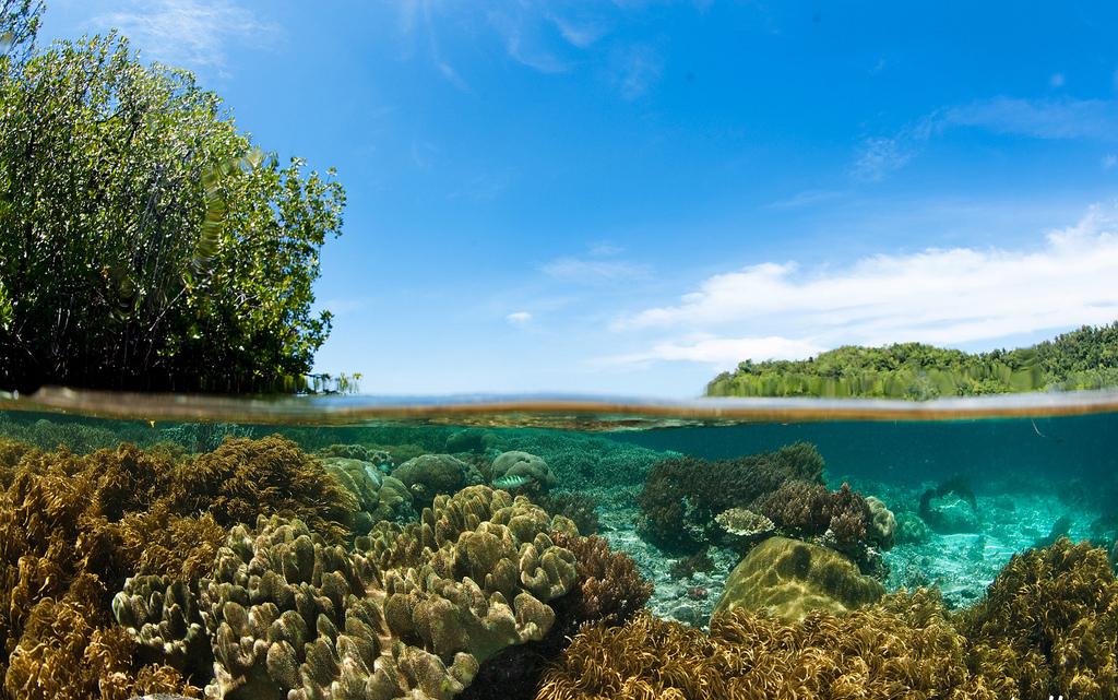 Пляж острова Раджа Ампат в Индонезии, фото 2