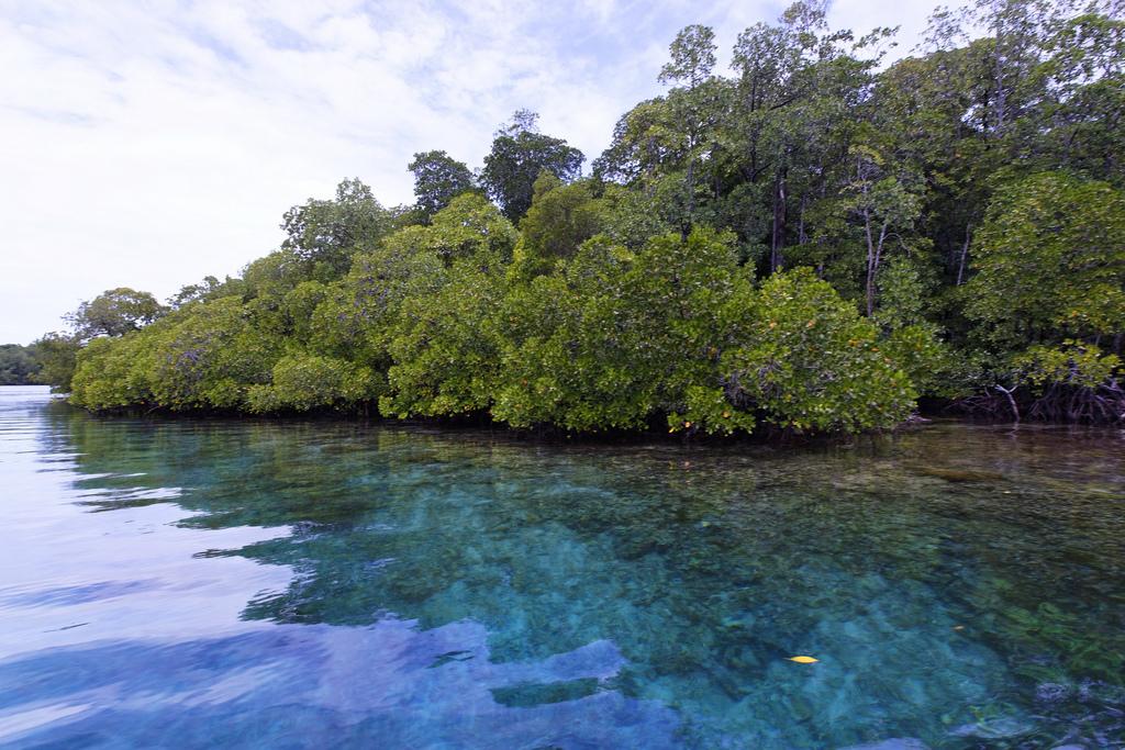 Пляж острова Раджа Ампат в Индонезии, фото 4