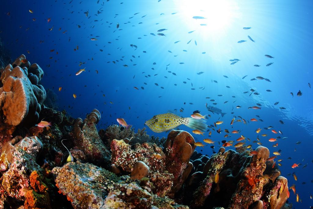 Пляж острова Раджа Ампат в Индонезии, фото 7