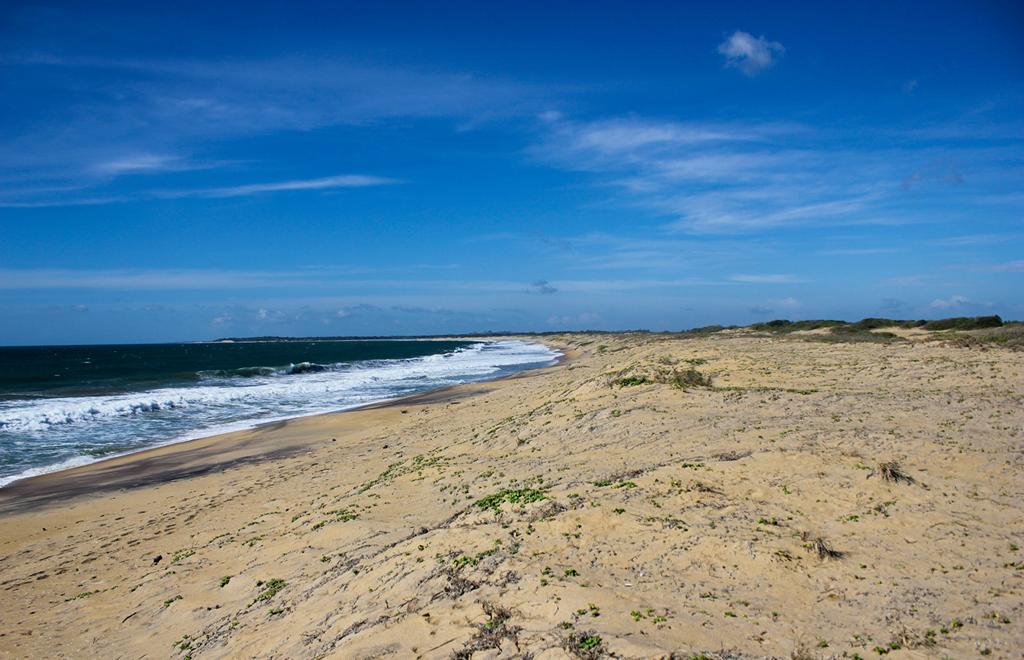Пляж Панама Бич в США, фото 6