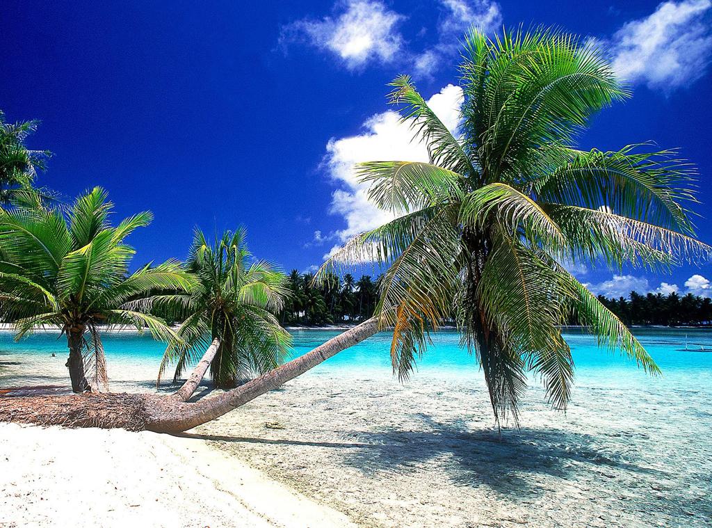 Пляж Атолл Рангироа во Французской Полинезии, фото 11