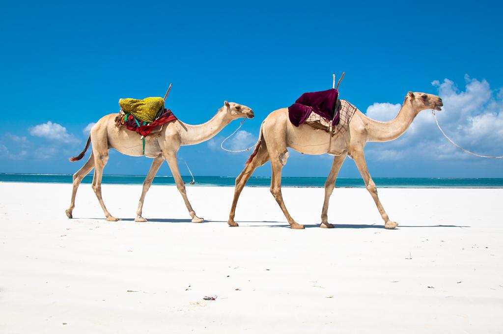 Пляж Диани в Кении, фото 1