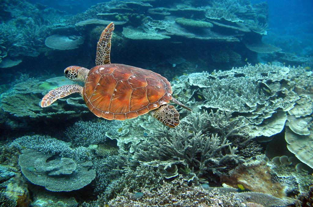 Пляж Большой Барьерный Риф в Австралии, фото 4