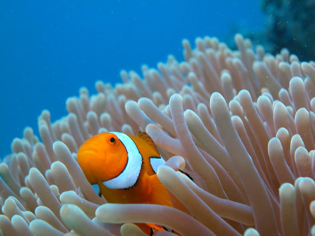 Пляж Большой Барьерный Риф в Австралии, фото 5