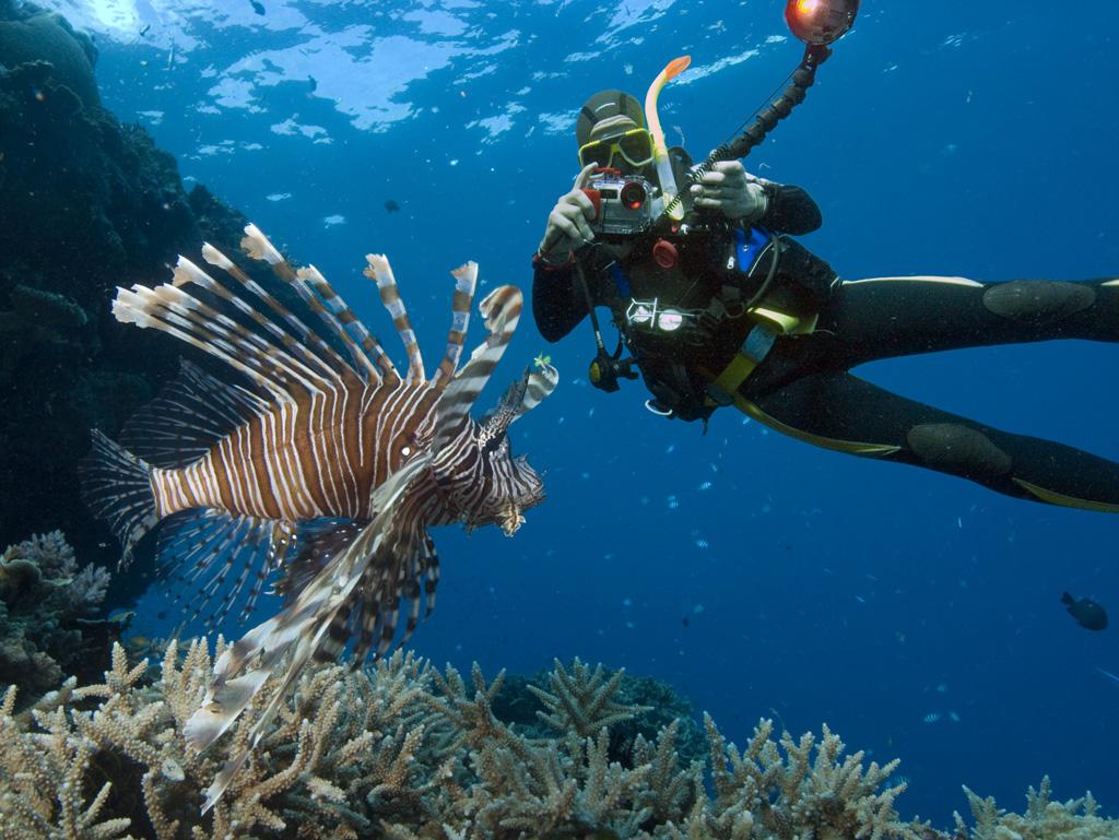 Пляж Большой Барьерный Риф в Австралии, фото 7