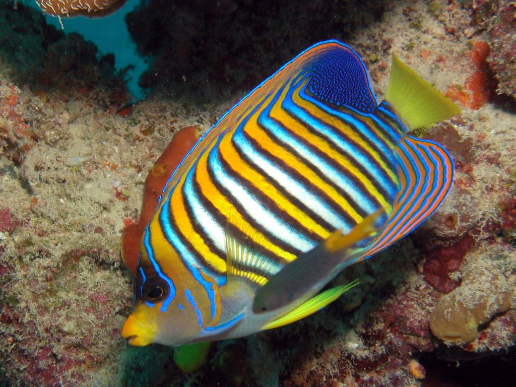 Пляж Большой Барьерный Риф в Австралии, фото 11