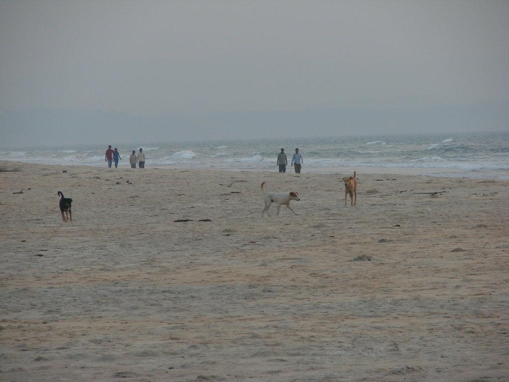 Пляж Варка в Индии, фото 3