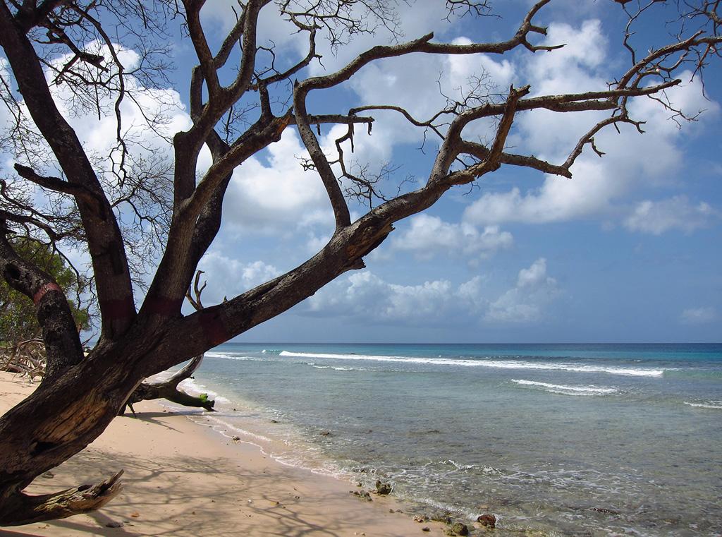Пляж Хейвудс в Барбадосе, фото 6