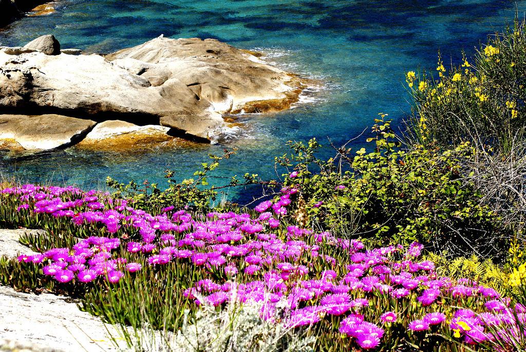 Остров Джилио в Италии, фото 1