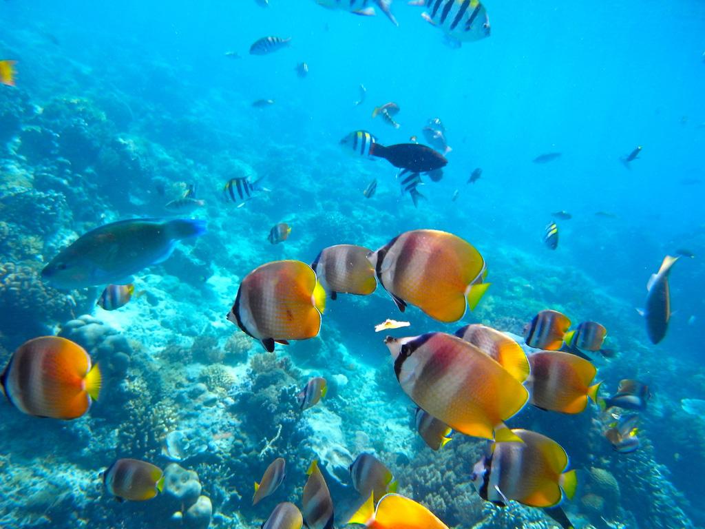 Пляж Ломбок в Индонезии, фото 9