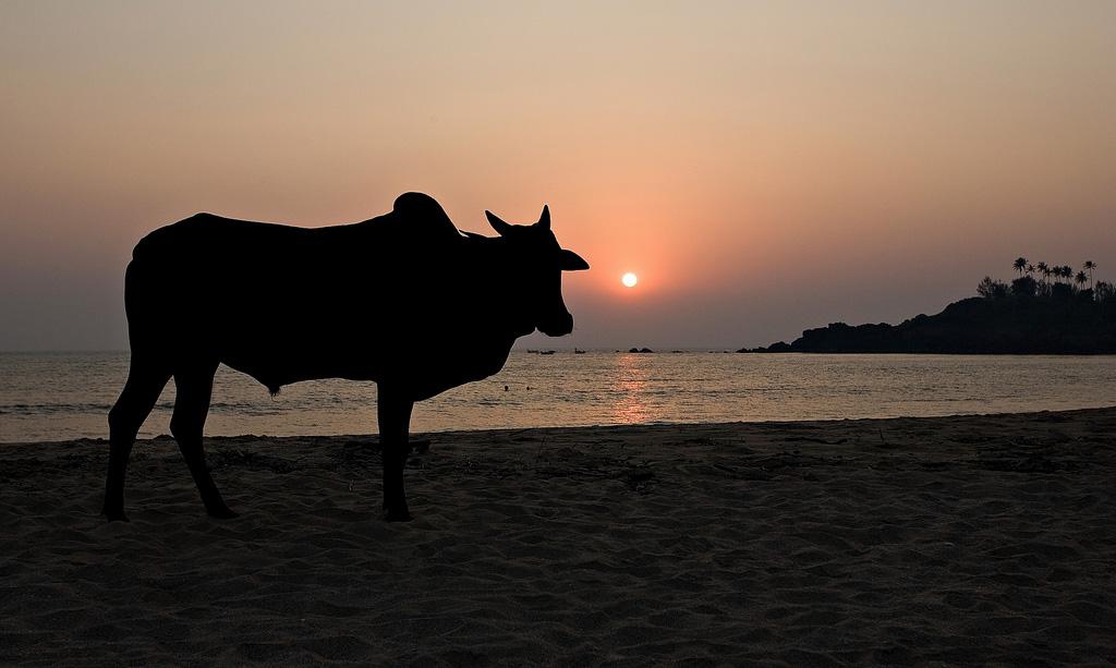 Пляж Патнем в Индии, фото 3