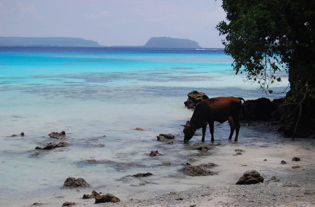 Пляж Шампань в Вануату, фото 3