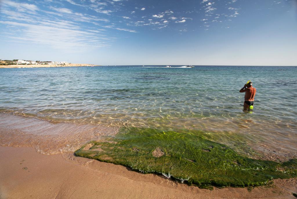 Пляж Шарм-Эль-Шейх в Египете, фото 4