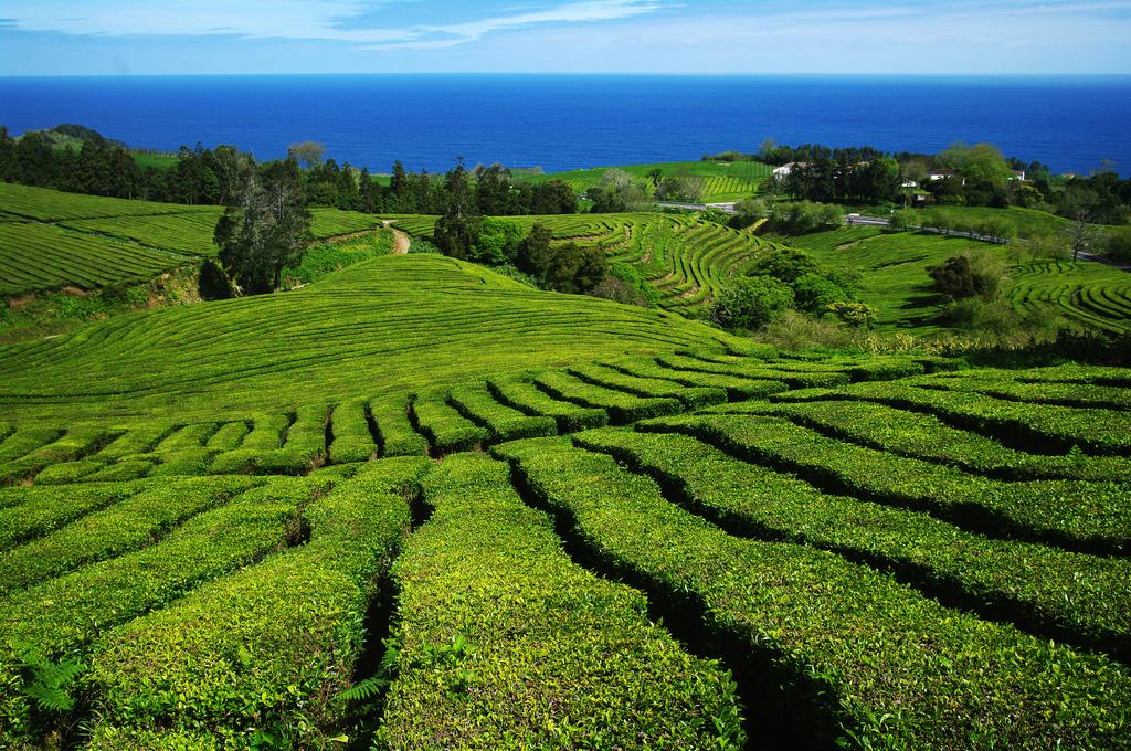 Азорские острова в Португалии, фото 15