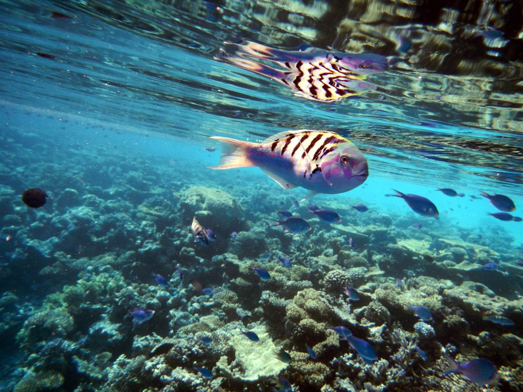 Пляж Атолла Ари на Мальдивах, фото 3