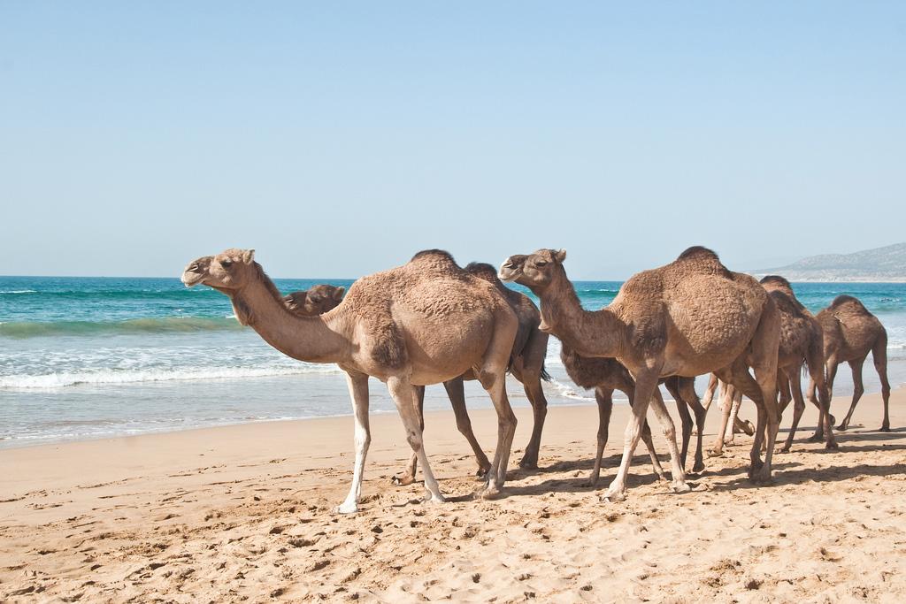 Пляж Тагхазоут в Марокко, фото 5